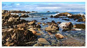 Monterey-Peninsula